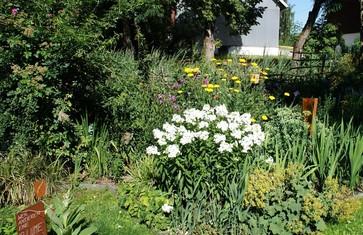 Im Naturgarten von Karin Kögl