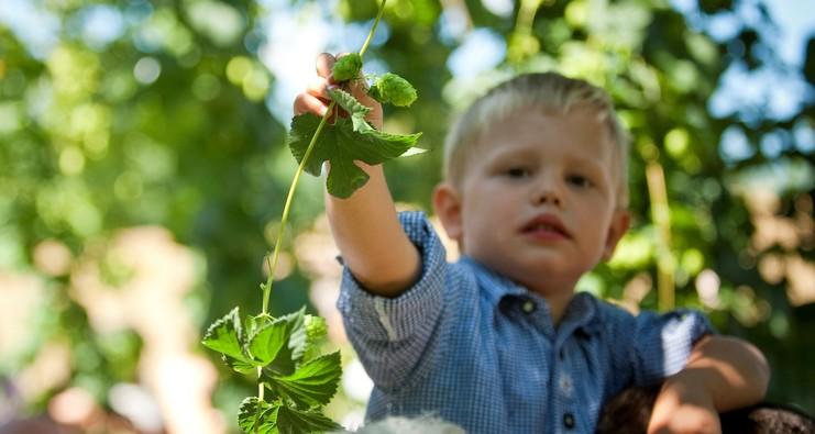 Junge im Hopfengarten