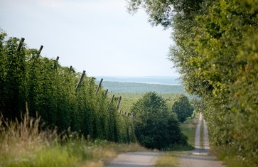 Wanderwege im Hopfenland Hallertau