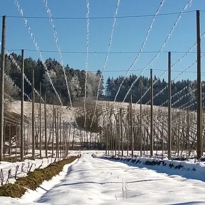 Gerüst eines Hopfengartens in der Hallertau im Winter