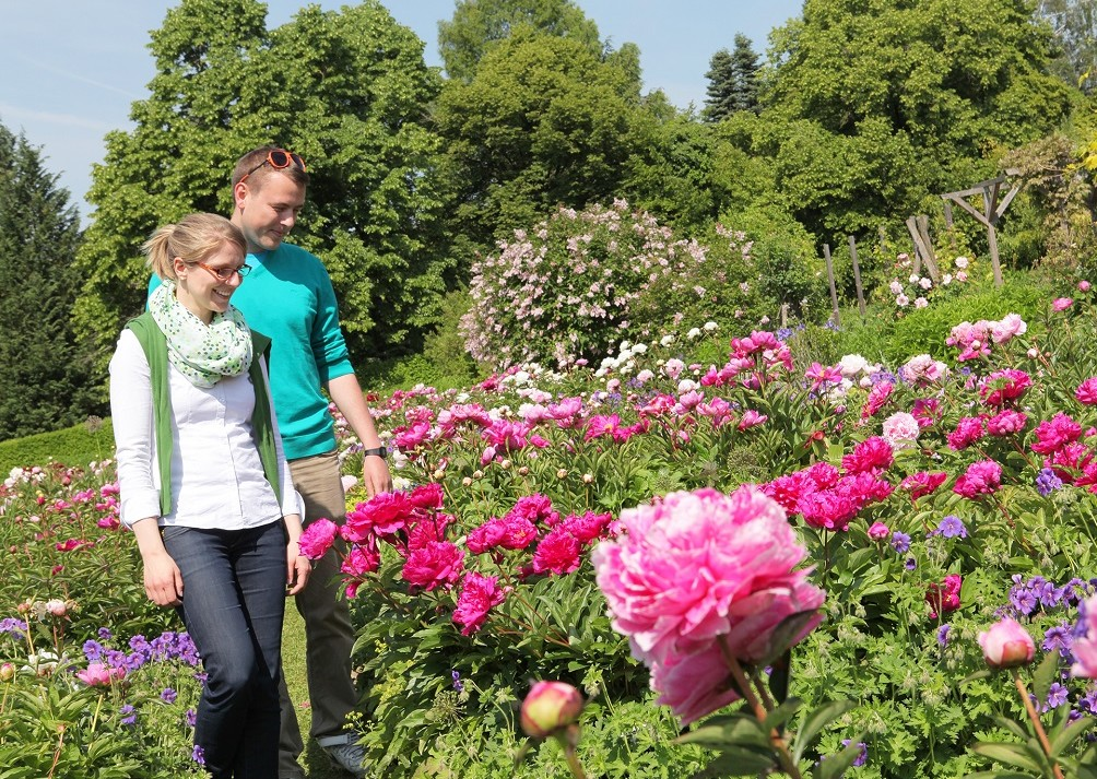 Pfingstrosen in den Staudengärten der Weihenstephaner Gärten in Freising